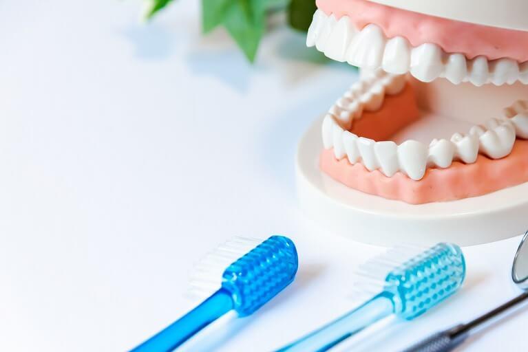 正しい歯磨きの仕方を習得